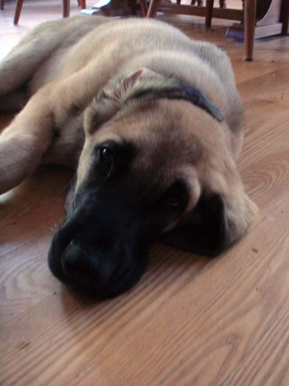 Sam puppy