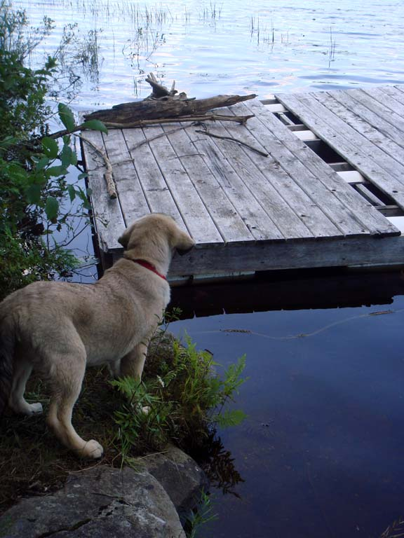 Sam checking out the dock