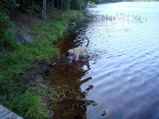 Samson learning water