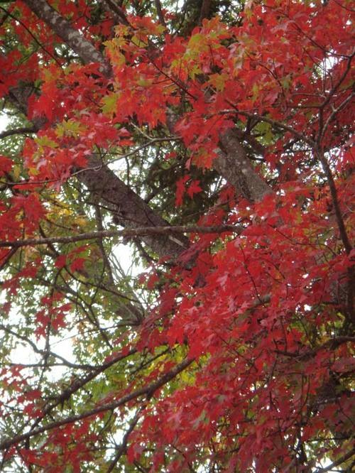 2007_foliage