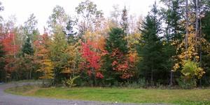 Autumn_2002_driveway_color