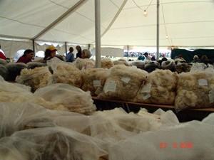 Fleece_tent_2_2005_common_ground_fair