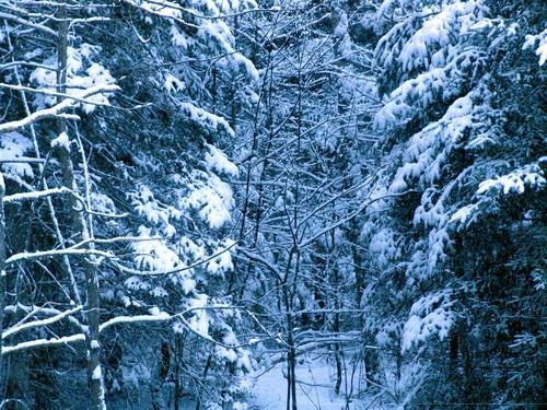 January_snowfall_003