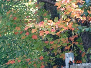 Oct_2005_foliage_003_standard_email_view